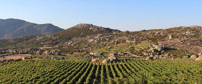 Volacus Wine