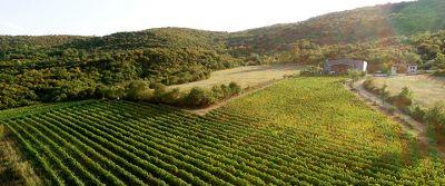 Taralas Winery