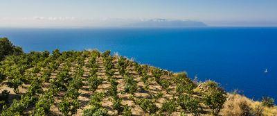 Petrakopoulos Wines