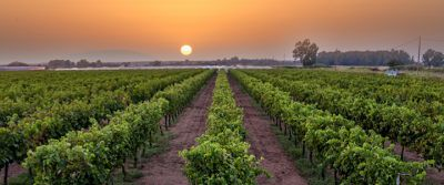 Koukos Winery