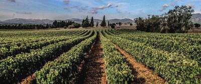 Moropoulos Winery
